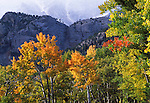fall, color, autumn,day, aspen, tree, mountain, landscape, forest, Rocky Mountain National Park, Colorado, USA