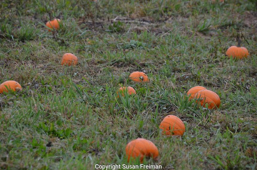 Cropsy Community Farm, October, 2013