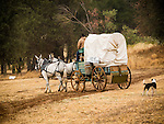 Days of '49 wagon train at their start, Cooper Vineyards, Shenandoah Valley, Calif.<br /> <br /> Diamond Jubilee commemoration of the founding of Amador County in 1854