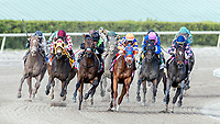HALLANDALE BEACH, FL - JAN 27:Jordan's Henny #2 (middle, back row) with Tyler Gaffalione in the irons for trainer Michael A. Tomlinson trails the field along the final turn yet wins the $175,000 Hurricane Bertie Stakes (G3) at Gulfstream Park on January 27, 2018 in Hallandale Beach, Florida. (Photo by Bob Aaron/Eclipse Sportswire/Getty Images)