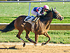 Rose Tree winning at Delaware Park on 10/15/16