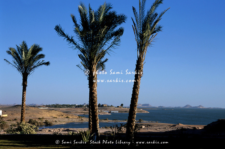 Palm trees on the bank of Lake Nasser in Nubia, Egypt.