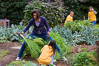 "29 Oct 2009, Washington, DC, USA --- ""First lady Michelle Obama harvests vegetables from the garden with children from Washington's Bancroft and Kimball Elementary schools, on the South Lawn of the White House in Washington                                          "" --- Image by © Brooks Kraft/Corbis"