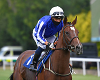 Hala Be Zain ridden by Silvestre De Sousa goes down to the start of  The Crouch's Down Maiden Auction Fillies Stakes during Horse Racing at Salisbury Racecourse on 13th August 2020