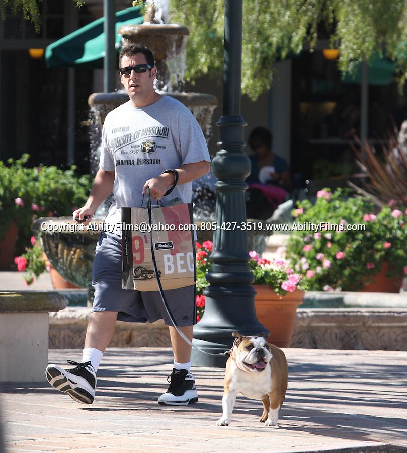Februrary 9th 2012 ..Adam Sandler eating lunch at Coogies restaurant in Malibu California & shopping at Becker Surf shop while walking his bull dog ...AbilityFilms@yahoo.com.805-427-3519.www.AbilityFilms.com