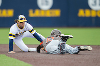 Michigan Wolverines shortstop Michael Brdar (9) tags Bowling Green Falcons baserunner Kory Brown (12) at second base on April 6, 2016 at Ray Fisher Stadium in Ann Arbor, Michigan. Michigan defeated Bowling Green 5-0. (Andrew Woolley/Four Seam Images)