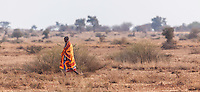 Masai in traditional tribal clothing of red and orange walking on open plains in Kenya, Africa (photo by Travel Photographer Matt Considine)