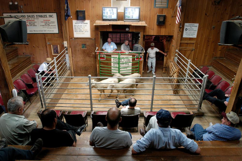 Livestock Auction | Edwin Remsberg Photographs