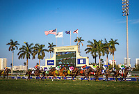 HALLANDALE, FL - JANUARY 28: First time by the grandstands in the La Prevoyante Stakes at Gulfstream Park on January 28, 2017 in Hallandale Beach, Florida. (Photo by Zoe Metz/Eclipse Sportswire/Getty Images)