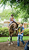 And Why Not before The Go For Wand Stakes at Delaware Park on 6/11/12
