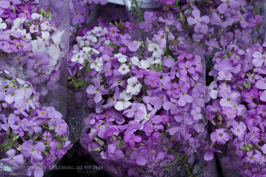 Bunches of Purple Flowers at the Union Square Market