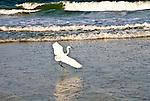 Soft Landing in Surf