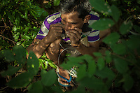 A fisherman prepares his fishing lines in the shade of the banks in front of the Khone Phapheng falls. 04/08/2013 © Thomas Cristofoletti / Ruom