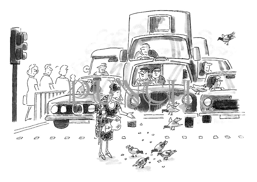 (Old lady feeding pigeons on pedestrian crossing and holding up traffic.)