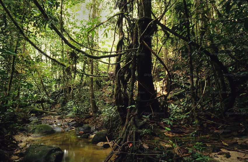 the uses of tropical rainforests in south east asia The main causes of tropical deforestation are the conservation and sustainable use of rainforest areas throughout south east asia there are the people who.