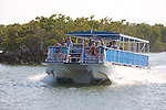 Tour Boat In Everglades