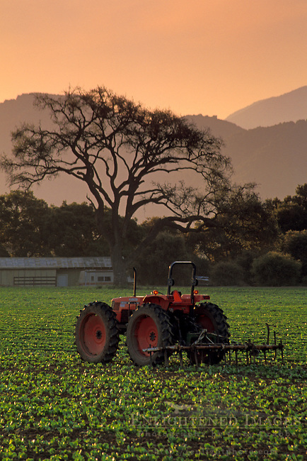 Tractor in field at sunrise, along Refugio Road, near Santa Ynez, Santa Barbara County, California