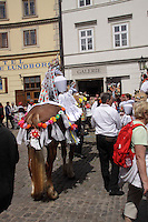Twelve-year-old Frantisek Libosvar dressed as a girl and with a rose in his mouth leads the royal procession during Ride of the Kings as part of Navalis Celebrations on May 15, 2015 in Prague, Czech Republic. The Navalis Saint John's celebrations take place to commemorate Czech saint and Prague native, Saint John of Nepomuk, patron of all people of the water. <br /> <br /> <br /> The Ride of the Kings takes place during the spring, as a part of the Pentecost traditions . A group of young men ride through a Prague in a ceremonial procession. The ride is headed by chanters, followed by pageboys with unsheathed sabres who guard the King &ndash; a young boy with his face partially covered, holding a rose in his mouth &ndash; and the rest of the royal cavalcade. The King and pageboys are dressed in women&rsquo;s ceremonial costumes, while the other riders are dressed as men. The entourage rides on decorated horses, stopping to chant short rhymes that comment humorously on the character and conduct of spectators. The chanters receive donations for their performance, placed either in a money box or directly into the riders&rsquo; boots. The King&rsquo;s retinue returns home after a few hours of riding, and celebrates in the evening at the house of the King with a small feast, music and dancing. The practices and responsibilities of the Ride of the Kings are transmitted from generation to generation. The traditional paper decorations for the horses and the ceremonial costumes, in particular, are made by women and girls familiar with the processes, colour patterns and shapes specific to each village