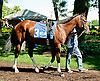 Wynn's Nighthawk before The Oh Say Stakes at Delaware Park on 6/29/13