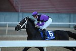 May 2, 2020: Warrior's Charge (6) with jockey Florent Geroux aboard during the Oaklawn Handicap at Oaklawn Racing Casino Resort in Hot Springs, Arkansas on May 2, 2020. Justin Manning/Eclipse Sportswire/CSM