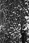Powdery snow attcing itself delicately to the bark of this French tree