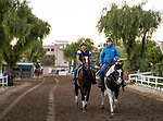 OCT 26: Breeders' Cup Classic entrant Yoshida, trained by William I. Mott, at Santa Anita Park in Arcadia, California on Oct 26, 2019. Evers/Eclipse Sportswire/Breeders' Cup