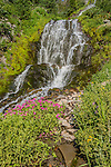 Vidae Falls surrounded by monkey flowers in spring.