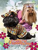 Alfredo, ANIMALS, dogs, photos+++++,BRTOXX02020CP,#a# Hunde, perros