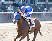 Midshipman, Godolphin's Eclipse-award-winning 2-year-old of 2008, made his long-awaited return to the races on Friday Sept. 18 against a solid field in a 6 1/2-furlong optional claiming race at Belmont Park. Racing extremely wide through the stretch, Midshipmen won easily by nearly 4 lengths over up-and-coming sprinter Just Ben. Also in the field was Edward Evans' Storm Play, also returning from a long layoff, who finished fourth. Midshipman, champion 2-year-old of 2008, made his long awaited 3-year-old debut on Friday, Sept. 18, 2009 at Belmont Park, defeating a strong field that included Just Ben and Storm Play. The son of Unbridled's Song, owned by Godolphin and trained by Saeed bin Suroor, drifted very wide in the stretch but won eased up by 4 lengths in the 6 1/2 length contest.