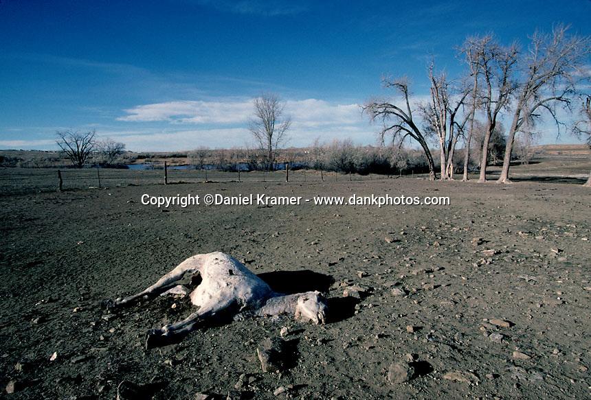 Montana, 2003