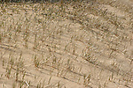Beach grasses on the shoreline of Lake Superior in Upper Michigan