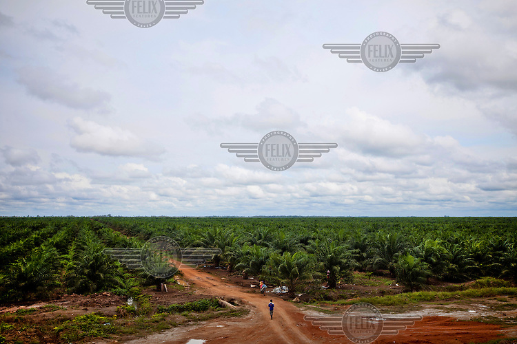 Workers at a palm oil plantation in Sembuluh in Kalimantan. They are paid 50,000 rupiah a day (approximately USD 5) by the palm oil companies that employ them. Indonesia is the largest producer of palm oil in world, with output estimates of about 23-25 million tonnes in 2012, from an estimated 8.2 million hectares of Indonesia land, mainly in Sumatra, Kalimantan and Sulawesi.