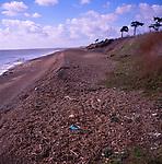 A294P2 Shingle ridges and beach Bawdsey Suffolk England