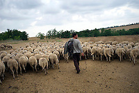 REPUBLIC OF MOLDOVA, Gagauzia, Vulcanesti, 2009/06/30..Pantel Kirilovitch CERNEVES, the stepfather of Viera, has forty sheeps. The herd includes animals than a dozen owners. Today is the turn of Pantel trafficking and to recover the milk to make cheese..© Bruno Cogez / Est&Ost Photography..REPUBLIQUE MOLDAVE, Gagaouzie, Vulcanesti, 30/06/2009..Pantele Kirilovitch Cernev, le beau père de Viera, possède une quarantaine de brebis. Le troupeau regroupe les bêtes d'une dizaine de propriétaires. Aujourd'hui, c'est au tour de Pantele de faire la traite et de récupérer le lait pour faire du fromage..© Bruno Cogez / Est&Ost Photography