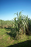 BELIZE, Punta Gorda, Toledo, some of the breathtaking scenery located around Belcampo Belize Lodge and Jungle Farm