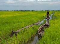 A fisherman in the rice fields on the road between Siem Reap and Battambang the agriculture region of Cambodia