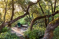 Stone patio shaded under oaks in morning sun in California garden, Napier Garden