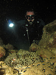 Kenting, Taiwan -- Diver on a night dive, looking at a sea anemone with sleeping clownfish.