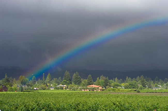 Rainbow over Napa Valley vineyard