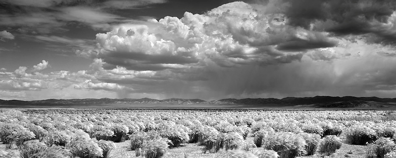 Grasses and thunderstorm. Ruby Lake National Wildlife Refuge, Nevada