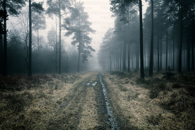 forest track in mist at daybreak in winter