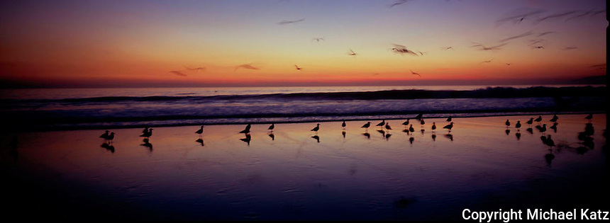Sunset, Santa Monica Beach with seagulls.