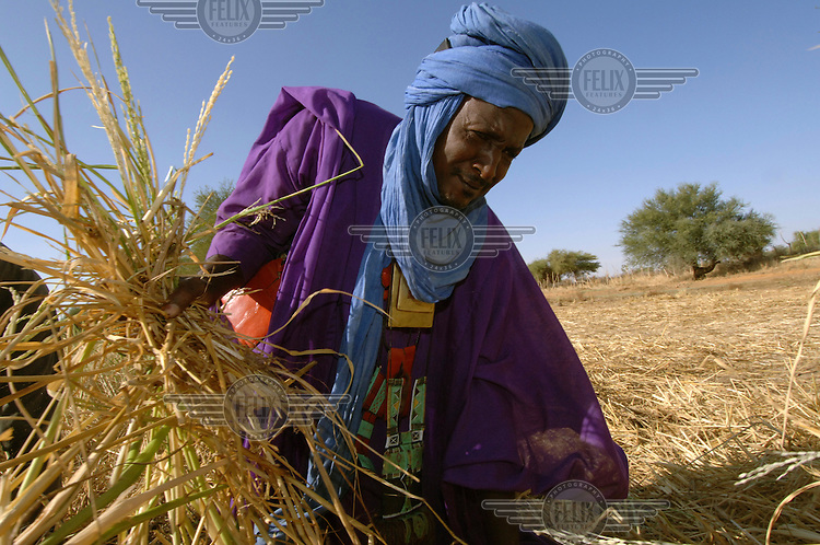 Assahi Ag Bonia harvesting rice on an Oxfam supported rice-growing project in Doro Village.