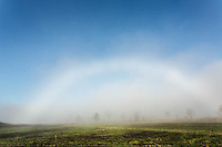 Fog bow, Cades Cove, Great Smoky Mountains National Park, Tennessee