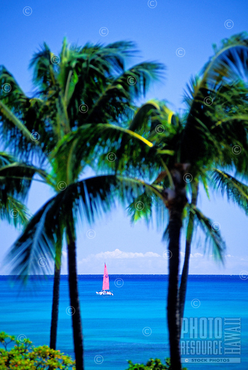 Soft pink sails of a catamaran on a blue ocean shot between two coconut palm trees.
