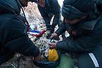 Snow Leopard (Panthera uncia) biologist, Shannon Kachel, veterinarian, Ric Berlinski, and volunteer, David Cooper, collaring male snow leopard, Sarychat-Ertash Strict Nature Reserve, Tien Shan Mountains, eastern Kyrgyzstan