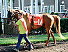 Fearsome before The Delaware Park Arabian Juvenile Championship (grade 3) at Delaware Park on 9/27/14