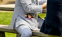 ELMONT, NY - JUNE 08: A man wears a fancy pinstriped suit with a stuffed monkey in his pocket during Friday racing action of the Belmont Stakes Festival at Belmont Park on June 8, 2018 in Elmont, New York. (Photo by Carson Dennis/Eclipse Sportswire/Getty Images)