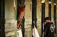 Saratoga Springs, NY  Thoroughbred Funny Cide on the morning before opening day at Saratoga Race Course in the backstretch..©Mitch Wojnarowicz All Rights reserved