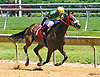 Maritime Pulpit winning at Delaware Park on 6/3/2017
